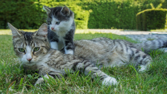 ¿Qué sabe de ti un gato de ojos verdes?